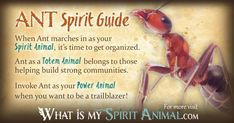 Get in-depth Ant Symbolism & Ant Meanings! Ant as a Spirit, Totem, & Power Animal. Plus, Ant in Far Eastern & Native American Symbols & Ant Dreams! Native American Zodiac, Native American Symbols, Animal Spirit Guides, Your Spirit Animal, Animal Meanings, Spiritual Animal, Power Animal, Spiritual Meaning, Animal Totems