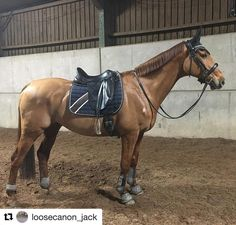 Jack looking  . . Font forget to tag @lme_bridlework for your chance to win a pair of reins in our monthly draw  .  #Repost @loosecanon_jack (@get_repost)  He was mega tonight. Love him in his @lme_bridlework patent noseband.  #loosecanon #training #dressage #itsadressagething #dressagewannabe #dressagerider #dressagehorse #equestrianlife #equinephotography #equinestyle #beesknees #saracenshine #feedthedifference