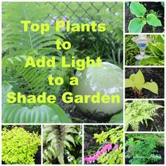 Add light to your shade garden with these decorative ideas.