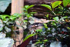 Items similar to Digital Desktop Wallpaper - Butterfly in Flight - Nature Photography - Wallpaper JPG on Etsy Photography Projects, Nature Photography, Plant Leaves, Desktop, Butterfly, Digital, Wallpaper, Creative, Plants