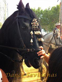 Andalusian horse, Jerez