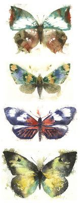 KO.35 butterflies moths 1 - giclee print from original watercolour