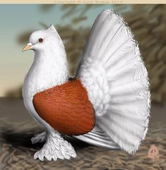 Indian Fantail pigeon (seems photoshopped or, is a clay model ! Cute Pigeon, Pigeon Bird, Pretty Birds, Beautiful Birds, Animals Beautiful, Unique Animals, Pigeon Pictures, Bird Pictures, Horse Pictures
