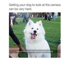 Funny Animal Picture Dump Of The Day 24 Pics animals silly animals animal mashups animal printables majestic animals animals and pets funny hilarious animal Funny Animal Memes, Cute Funny Animals, Dog Memes, Funny Animal Pictures, Cute Baby Animals, Funny Cute, Funny Dogs, Animal Pics, Funny Happy