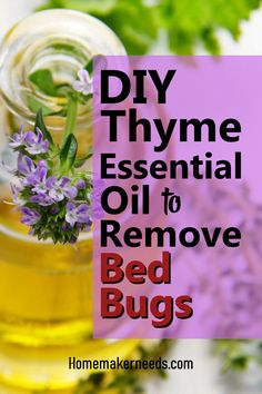 Learn how thyme essential oils kills and remove bedbugs. All you need to know about essential oils that are best for removing bedbugs at home. Prevention of bedbugs and killing them at the same time. How to prepare essential oil spray for bedbugs. Thyme Essential Oil Uses, Essential Oil Spray, Making Essential Oils, Essential Oils Cleaning, Bed Bug Remedies, How To Get Rid, How To Remove, Thyme Plant, Esential Oils