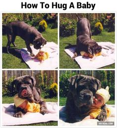 Why I love big dogs (#5)