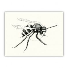 Wildlife Analysis I Wood Print $30.00