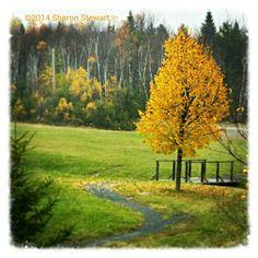 Miramichi, NB  Canada Scenery, Country Roads, Canada, Seasons, Fall, Photos, Photography, Beauty, Autumn