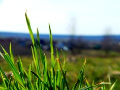 A grass / trawa