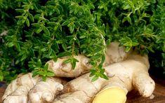 Zitronig mit einer deutlichen Ingwernote Kraut, Garden Planning, Stuffed Mushrooms, Vegetables, Food, Future, Thyme Recipes, Healthy Food, Plants