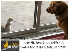 Neighhbours helping neighbours! #FeelGoodFriday #goldenretriever #secondchance Feel Good Friday, Shit Happens