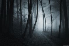 Shutterstock Blog Feature -Creepy Places Word Of The Day, S Word, S Grammar, Night Shadow, Past Tense, Night Aesthetic, Dark Forest, Horror Movies, Creepy