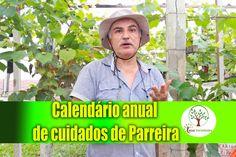Calendário Anual do cultivo de Parreiras e outras plantas, qualidade do ...