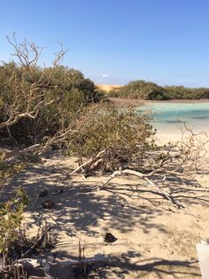 Mangrovie sharm El sheik