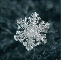 Photo of a real snow flake, beautiful. No man can design something as beautiful as this. Nature is the best inspiration, full of life and form, revealing it's beauty. Snowflake Photos, Snowflake Designs, I Love Snow, Let It Snow, Snowflake Photography, Nature Photography, Inspiring Photography, Crystal Snowflakes, Real Snowflakes