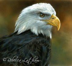 Strength - American Bald Eagle, ~6x6, watercolor on board, ©Rebecca Latham Hope you enjoy! ..share if you like. http://lathamstudios.com/rebecca/2013/04/strength-american-bald-eagle-6x6/ art artist painting watercolor wildlife wildlifeart realism bird raptor eagle
