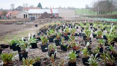 perennials set out for planting at Somerset  visit: hauserwirthsomerset.com for details  Photo: Vincent Evans  _/\/\/\/\/\_