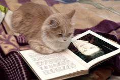 Catwoman by counselor with cat reading the story by (jedigirlsc) Funny Cats, Funny Animals, Cute Animals, Animal Fun, Fat Cats, Cats And Kittens, Kitty Cats, Cat Noises, Husky