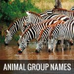 25 Strange Names For Groups Of Animals
