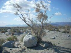 Rocks and tree. #holdzit