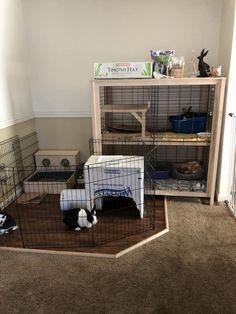 Indoor Rabbit House, Rabbit Hutch Indoor, House Rabbit, Bunny Rabbit, Indoor Rabbit Cage, Bunny Cages, Rabbit Cages, Bunny Room, Bunny Hutch