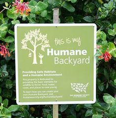 Pledge to make a difference for wildlife in your own #HumaneBackyard
