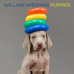 William Wegman Puppies 2015 Wall Calendar - http://www.thepuppy.org/william-wegman-puppies-2015-wall-calendar/