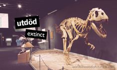 Swedish Adjectives: utdöd - extinct