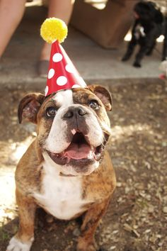 #English #Bulldog First #Birthday. #dogs #pets #dog #animals #english #bulldogs #party