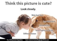 Learning dog body language can save a life. Dogs And Kids, I Love Dogs, Puppy Love, Illinois, Dog Body Language, Dog Spaces, Dog Attack, Dog Safety, Safety Tips