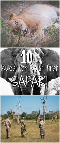 Tips for your first safari in Africa. Including Tanzania, Kenya, Zambia, Zimbabwe, and South Africa!