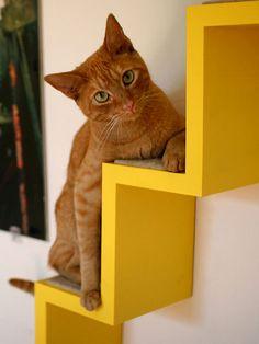 Pensou que os gatinhos fofos tirariam folga no Domingo? Olha eles aqui! - {Olhar 43} {Olhar 43}