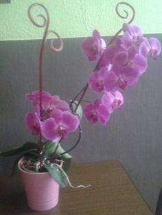 Další kvetoucí orchidej