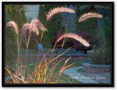 . Garden, Plants, Garten, Lawn And Garden, Gardens, Plant, Gardening, Outdoor, Yard