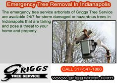 http://www.griggstree.com/emergency-tree-service