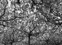 Bright Canopy by Kevin Connolly   Berlin, Germany   National Geographic Photo Contest 2013 - In Focus - The Atlantic