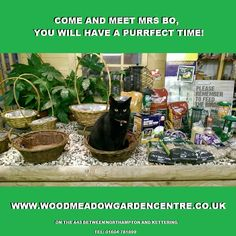 Woodmeadow Garden Centre on the A43 between Northampton and Kettering.