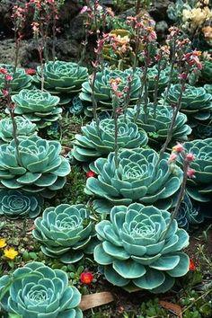 Suculento La vida vegetal: Top 20 imágenes más vistas, curtidos y compartidas en el Fanpage blog en Facebook - Semana XIII - 12/08/2013 a 08/19/2013 ...:
