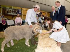 Catherine, Duchess of Cambridge feeds a ram called Fred as she visits the Sydney Royal Easter Show on April 2014 in Sydney, Australia. The Duke and Duchess of Cambridge are on a three-week tour. Get premium, high resolution news photos at Getty Images Duchess Kate, Duke And Duchess, Duchess Of Cambridge, William Kate, Prince William, Royal Animals, Easter Show, Bald Spot, Visit New Zealand