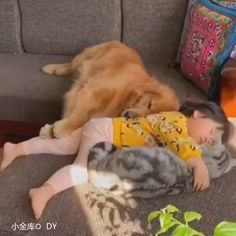 Savings Challenge Discover The most special nanny Ive ever known! So heartwarming Cute Baby Videos, Cute Animal Videos, Funny Animal Memes, Funny Animal Videos, Cute Funny Animals, Funny Animal Pictures, Cute Baby Animals, Animals And Pets, Cute Animal Humor