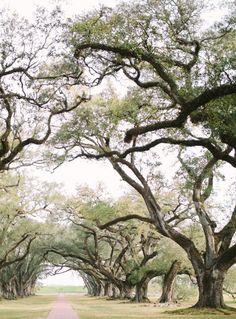 lowcountry oak