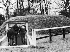 A rare black and white photograph of the great TB stallion Nearco being led out of his specially built underground bomb shelter at the Beech House Stud during the Second World War. Photo was taken by the famous equestrian photographer Anscomb. The image is known as THE ALL CLEAR, 1941.