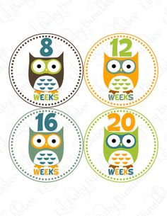 Pregnancy Baby Bump Stickers - Leighton - Hoot Hoot Owls in Brown, Green, Orange, and Blue - Great Photo Prop for Expectant Moms via Etsy