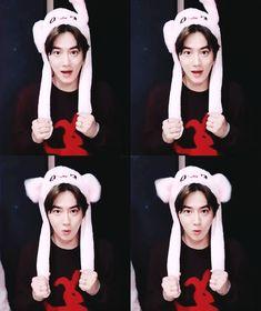 Chen, Ko Ko Bop, Baekhyun Chanyeol, Kim Junmyeon, Beautiful Gif, Exo Memes, Cute Bunny, Kpop Boy, Cute Quotes