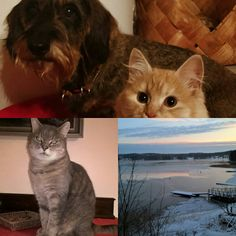 Country, Cats, Animals, Gatos, Animales, Rural Area, Animaux, Animal, Country Music