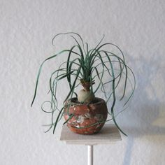 Scale Dollhouse Miniature Ponytail Palm. $35.00, via Etsy.