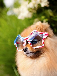 Patriotic puppy #July4th #charmingcharlie #ccstyle