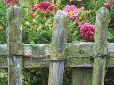 Rustic Effect  Rustic features like an old wooden fence is a staple in the cottage garden style. This rustic fence is a beautiful boundary for a border of roses and poppiesl
