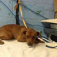 San Bernardino, CA - Terrier (Unknown Type, Small). Meet URGENT ON 6/22 San Bernardino a Dog for Adoption.