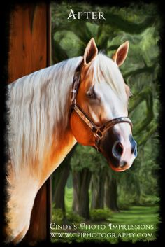 """A digital painting of a beautiful prize-winning horse. If you have a horse you would like """"painted"""" contact me at www.cpiphotography.com!"""